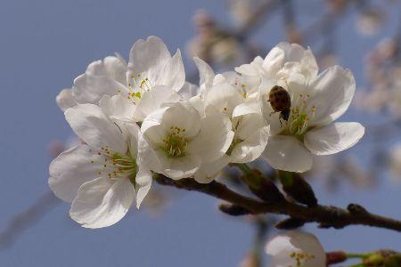 春天来了,双语花园笑开了花